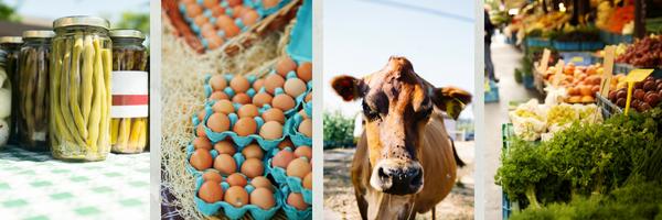 farm fresh foods