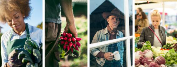 Farm Food Collage